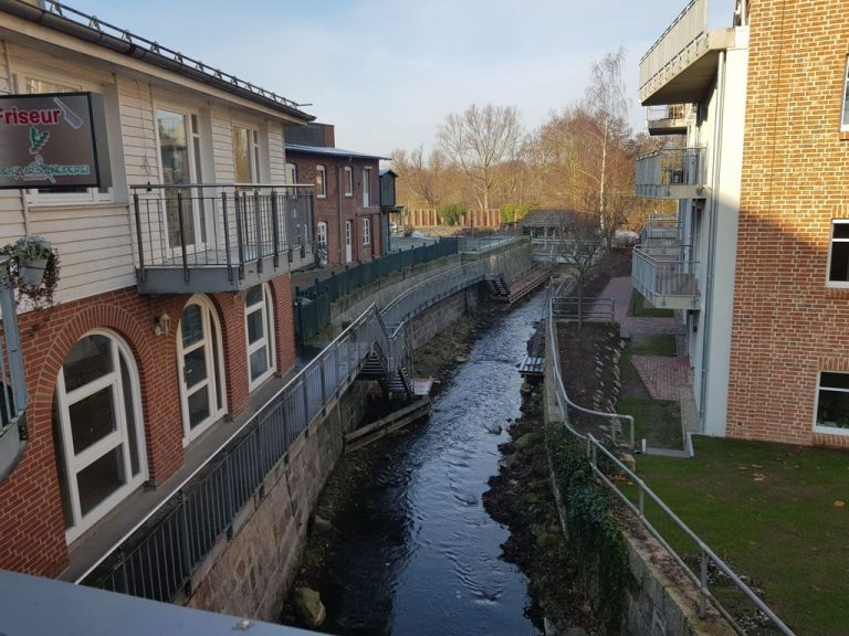 Fotos Bräutigam-Eiche bei Eutin und Plön im Sommer und Winter