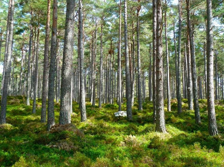 Was ist eine Baumschule und was macht sie?